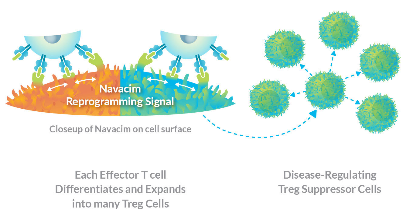Reverse autoimmune disease by reprogramming disease-causing immune T cells to differentiate and expand into disease-regulating Treg cells